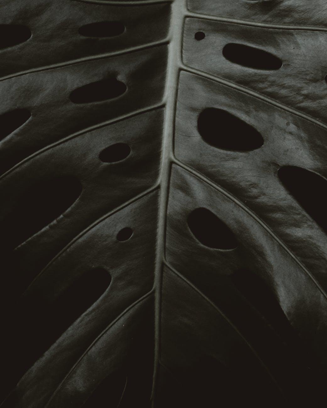 close up view of a big leaf